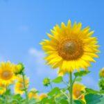 暑中見舞い例文■先生から子供へおすすめのコメントは?